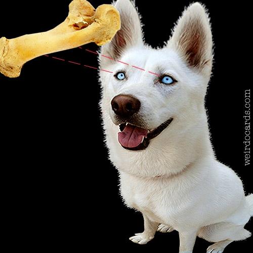 Throw The Dog A Bone eCard