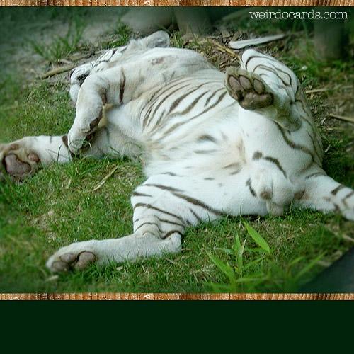 Crouching Tiger eCard