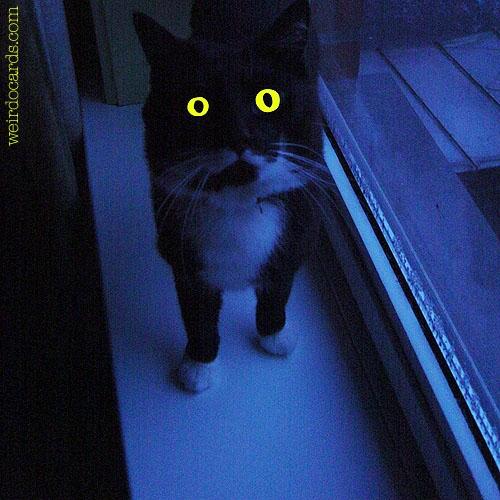 Night Eyes eCard