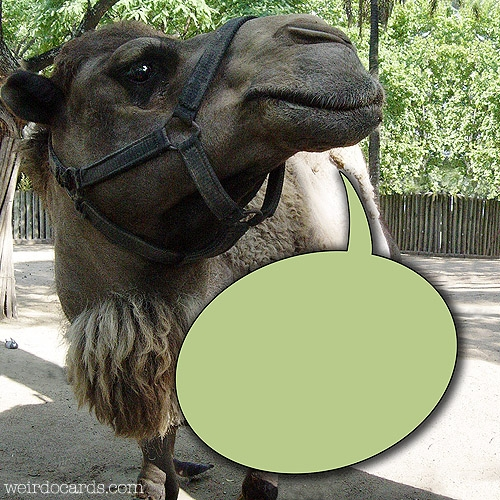 Camel eCard