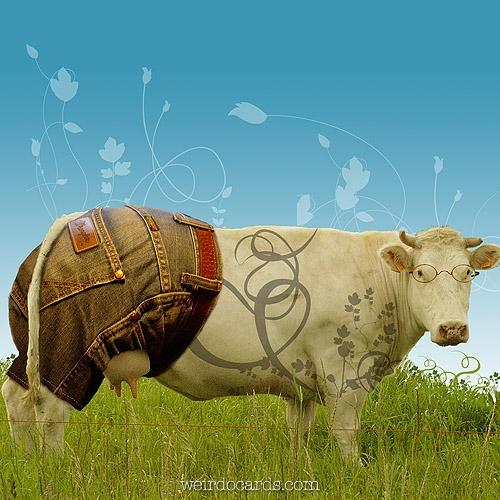 Designer Cow eCard
