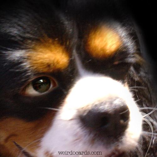 Wink Of A Dog eCard